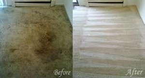 carpet cleaners Westwood